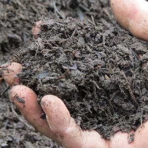 Rotting manure