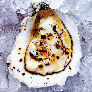 Oyster oil